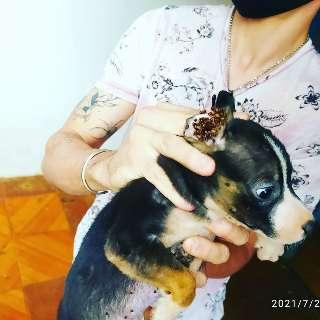 Polícia resgata 11 cachorros e gata cega vítimas de maus-tratos