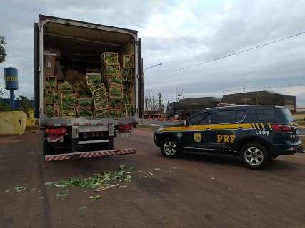 """Caminhão carregado com repolho e laranja """"escondia"""" 500 mil maços de cigarros"""