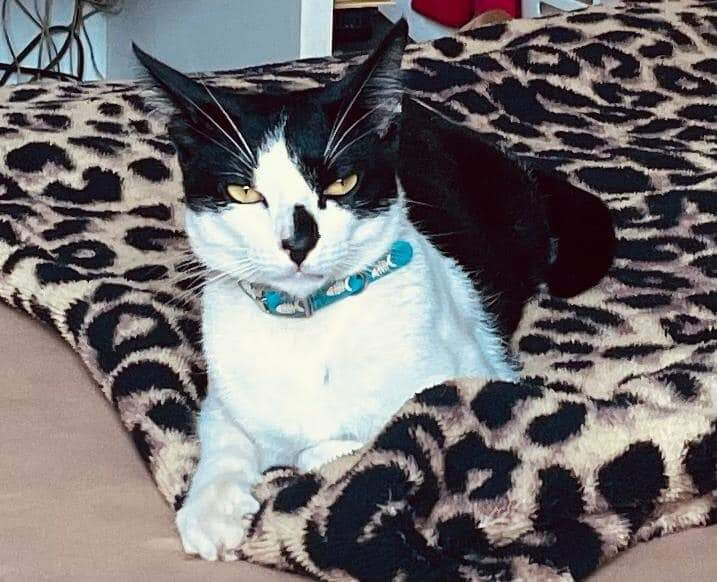 Gato, chamado de Fofinho, foi encontrado na rua pela moradora do condomínio e adotado (Foto: Divulgação/Arquivo Pessoal)