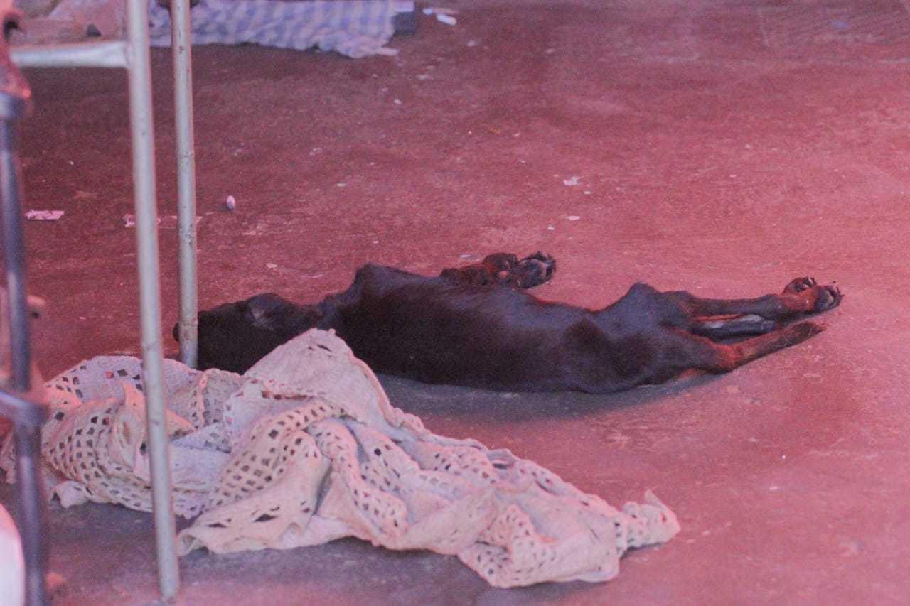 Animal encontrado morto em varanda de residência (Foto: Marcos Maluf)