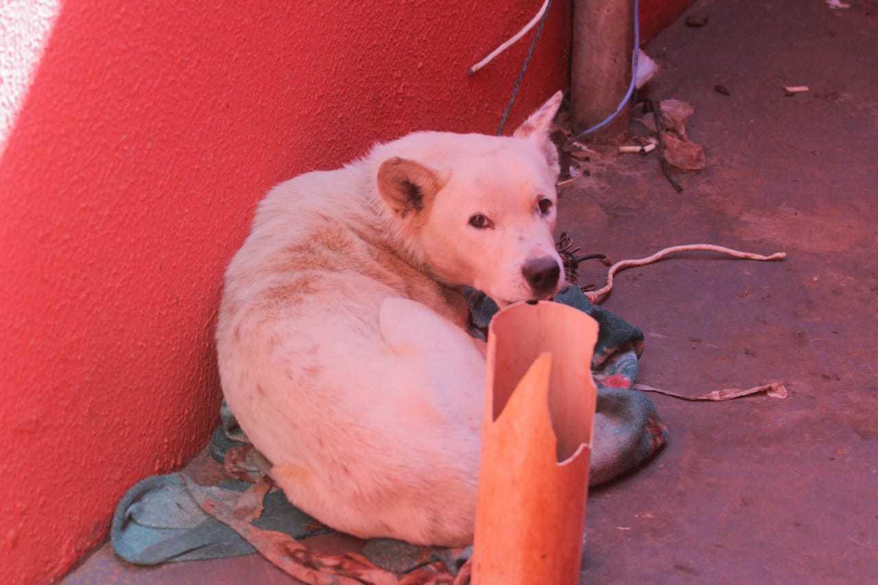 Animal encontrado vivo em varanda de residência (Foto: Marcos Maluf)