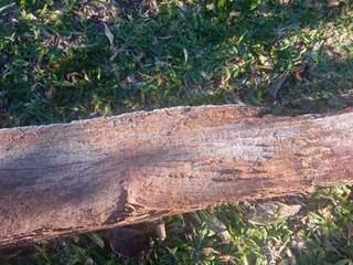 Em Tacuru, ao Sul do Estado, tronco de árvore e gramado amanheceram com gelo. (Foto: Direto das Ruas)