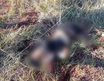 Vídeo: corpos de militares foram destroçados por bomba enterrada na estrada