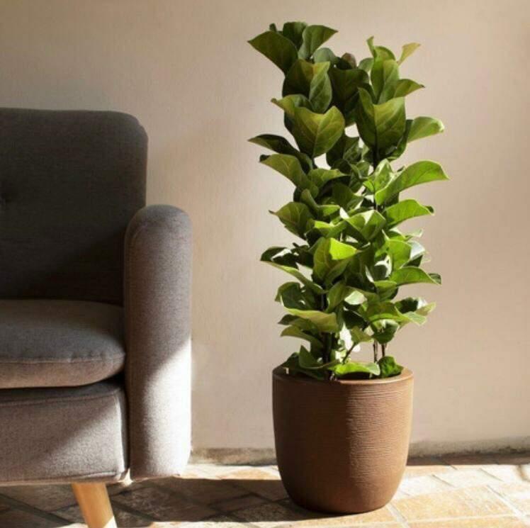 A planta exposta à luz solar. (Foto: Reprodução/Pinterest)
