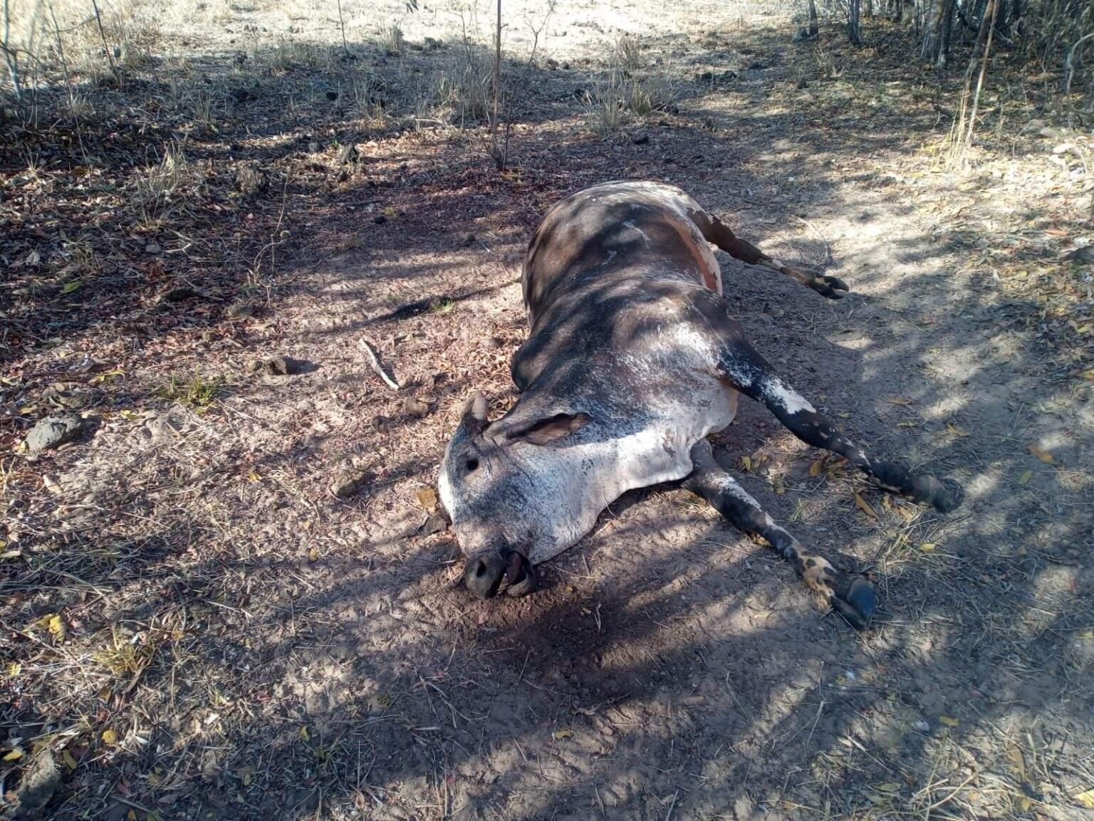 Dois animais morreram e 20 foram encontrados debilitados. (Foto: Divulgação/PMA)