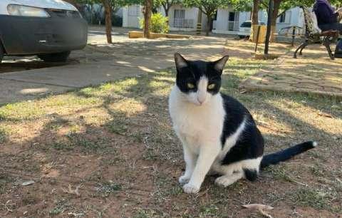 """""""Frajola"""" é bode expiatório, dizem moradores sobre gato que divide condomínio"""