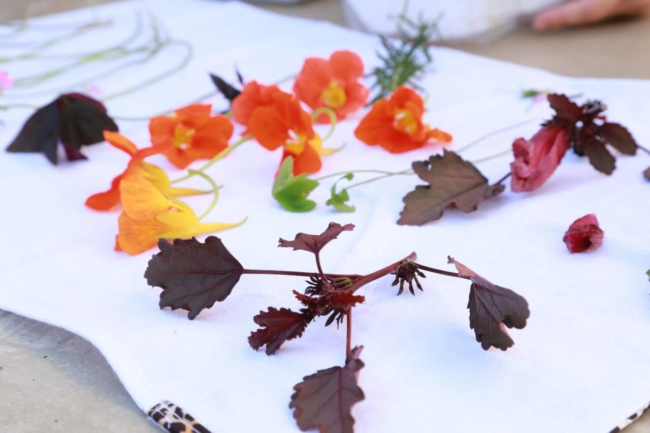 Flores comestíveis trazem benefícios com seus aromas aos temperos. (Foto: Kísie Aionã)