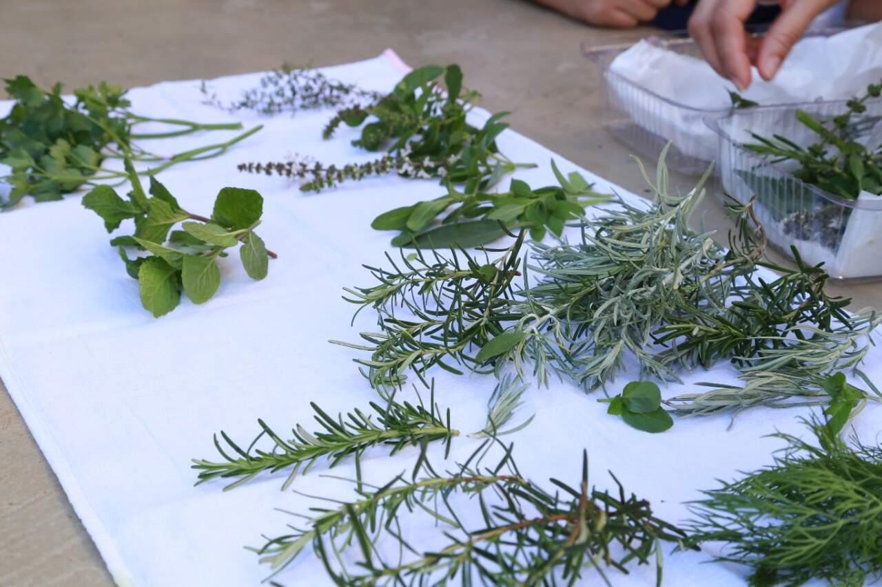 Hortaliças estão disponíveis para os participantes da oficina. (Foto: Kísie Aionã)