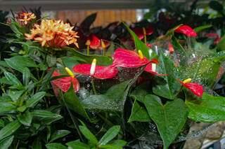 Plantas são fresquinhas, vindas direto de Holambra. (Foto: Marcos Maluf)