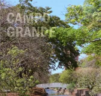 """Consenso entre quem vem de fora, arborização é """"cartão postal"""" de Campo Grande"""