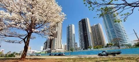 Ipês brancos se espalham pela cidade e indicam últimas floradas do ano