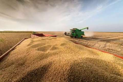 MS já acumula 4 milhões de toneladas de milho perdidas na seca