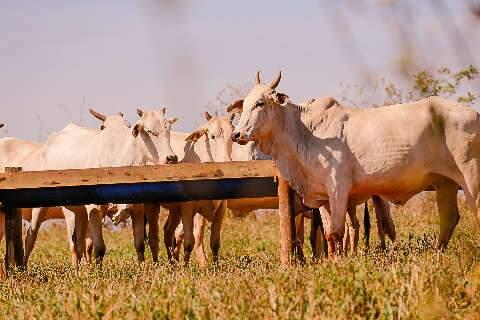 """Apesar de casos de """"vaca louca"""", Famasul não vê impacto na produção local"""