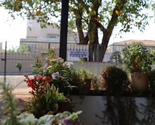 Suculentas, cactos e outras flores decoram a varanda. (Foto: Jéssica Fernandes)