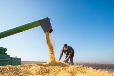 Safra 20/21 cai 1,8% e é estimada em 252,3 milhões de toneladas de grãos