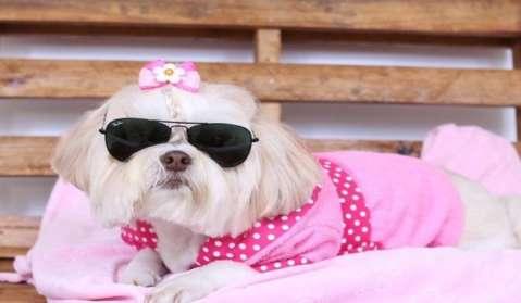 De graça: Curso ensina a fazer roupinhas de cachorro está com 20 vagas abertas