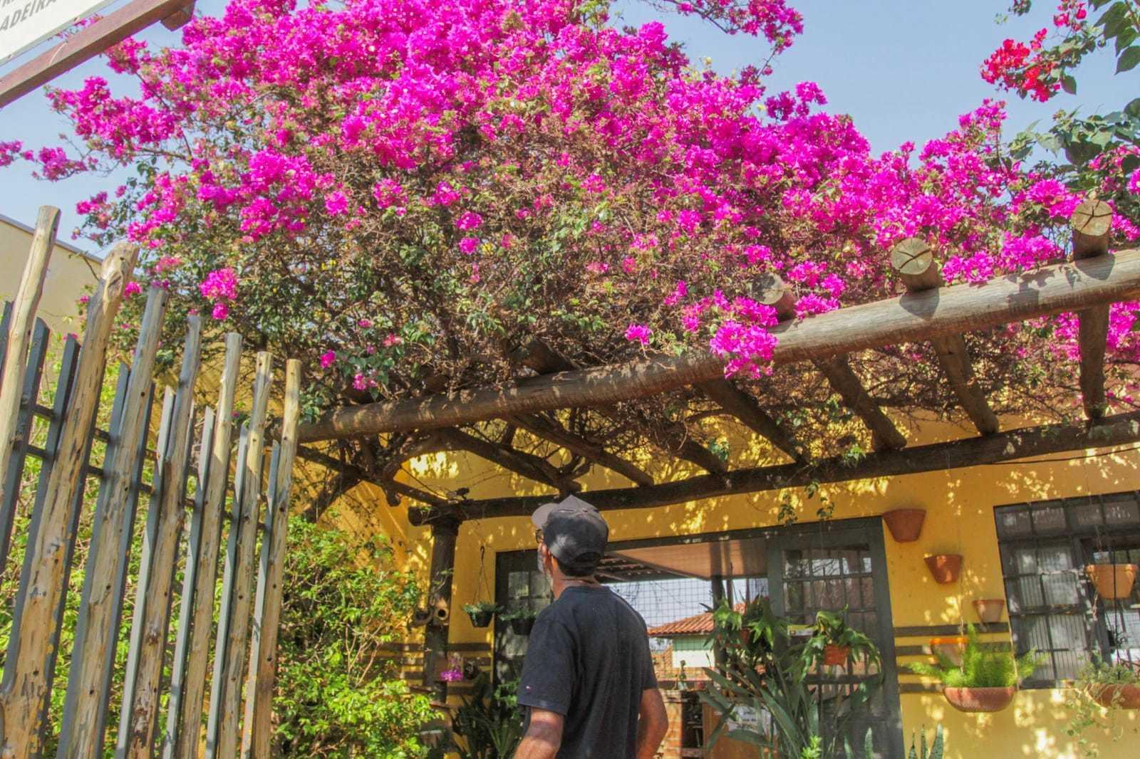 Morador admirando a florada da primavera (Foto: Marcos Maluf)