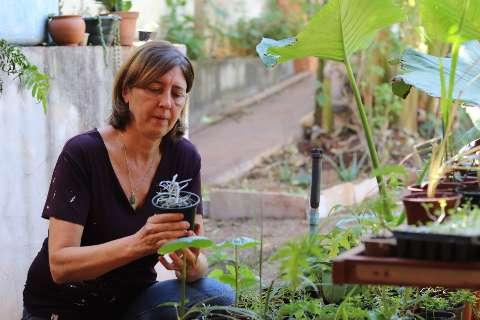 Coluna estreia falando de cultivo de temperos e tem oficina grátis
