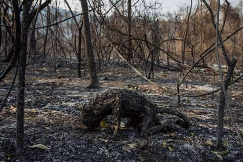 Fogo matou mais de 17 milhões de animais no Pantanal, estimam pesquisadores