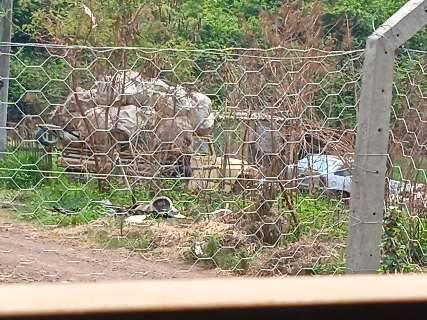 """Moradora reclama de """"invasores"""" e lixão a céu aberto no Ramez Tebet"""