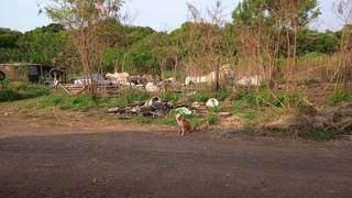 Área de vegetação virou depósito de lixo de pessoas que invadiram a região. (Foto: Direto das Ruas)