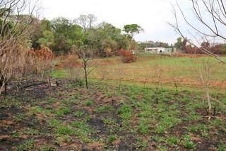 Grama verde já voltou a brotar em área que foi consumida pelo fogo. (Foto: Paulo Francis)