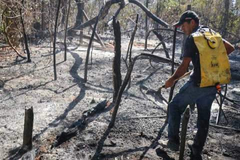 Após 5 hectares virarem cinzas, 500 mudas serão plantadas no Parque dos Poderes