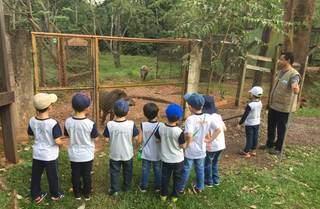 Alunos de escola particular da Capital observam antas em recuperação no Cras. (Foto: Escola Materna/Divulgação)