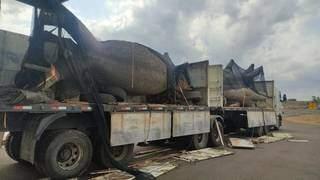 Árvore que estava sendo transportada sobre a carga de cocaína. (Foto: PRF)