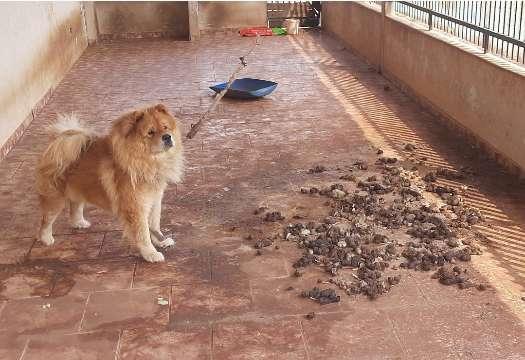 Cachorro é resgatado após ser abandonado por 5 meses em residência