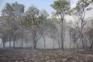 Área de vegetação no Bairro Santo Eugênio, ao lado da empresa Matpar. (Foto: Paulo Francis)