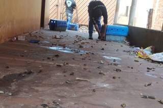 Varanda de residência lotada de fezes; cinco cães viviam sem comida no local. (Foto: Divulgação)