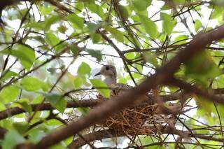 Uma das árvores de Pedro é usada para sustentar ninho de ave. (Foto: Paulo Francis)
