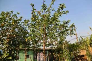 Casa na mesma região de Pedro compartilha a alta presença de árvores, no Jardim Batistão. (Foto: Paulo Francis)