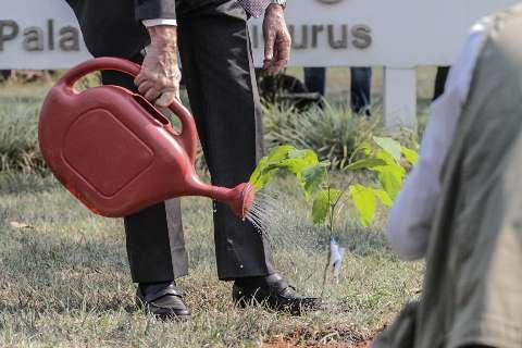 Plantio de mudas no Parque dos Poderes é esperança para retomar verde da região