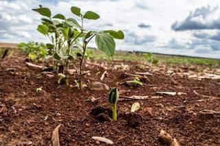 Prazo para plantio da soja 2021-22 em MS termina no dia 31 de dezembro. (Foto: Arquivo/Famasul)