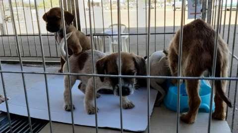 Prefeitura promove feira de adoção no CCZ com 50 animais disponíveis