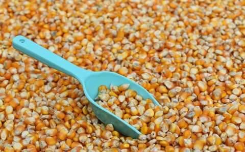 Governo suspende PIS/Cofins na importação de milho para desonerar custo do grão