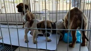 Cachorros de idades variadas estarão disponíveis para adoção no CCZ. (Foto: Divulgação)