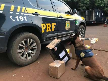 Cães farejam encomendas de drogas prestes a serem despachadas nos Correios