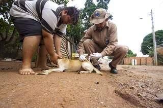 Vacinação antirrábica na faixa da fronteira entre Brasil e Bolívia garante bloqueio da doença (Foto Divulgação)