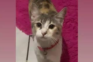 Minerva havia sido adotada por Camila 8 meses atrás (Foto: Aquivo Pessoal)