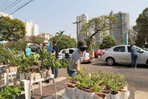 Prefeitura entregou 10 mil mudas de árvores neste sábado