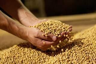 Apesar de crescimento de 7% na área plantada, atingindo 3,776 milhões de hectare, expectativa é de que a produtividade da soja seja menor nesta safra. Foto: Divulgação