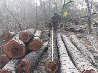 Toras de madeira apreendidas na propriedade. (Foto: Divulgação/PMA)