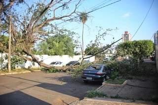 Carro foi parcialmente destruído por árvore. (Foto: Paulo Francis)