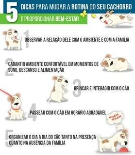 Dicas simples para mudar a rotina do seu cachorro. (Arte: Henrique Lucas)