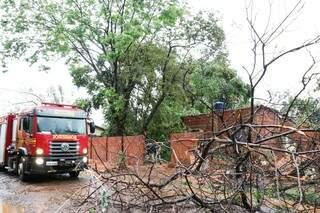 Galhos que ficaram na rua após duas árvores caírem sobre casa no Bairro São Conrado. (Foto: Henrique Kawaminami)