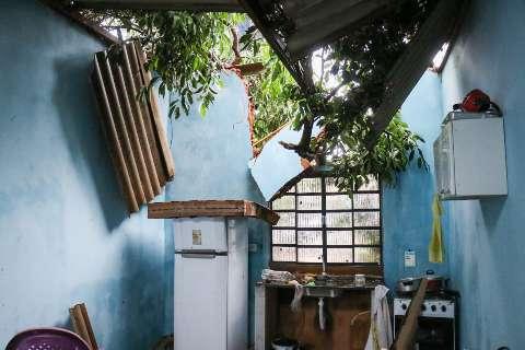 Chuva com ventos de 73 km/h já derrubou 46 árvores em Campo Grande