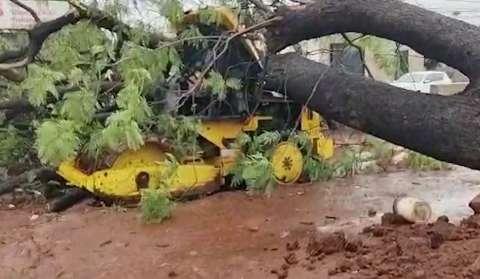Árvore de grande porte cai na Avenida Gunter Hans e destrói trator